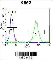 Anti-CTF1 Rabbit Polyclonal Antibody (APC (Allophycocyanin))