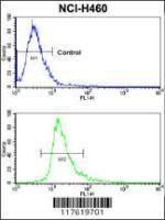 Anti-CXADR Rabbit Polyclonal Antibody